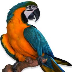 Попугаи и птицы