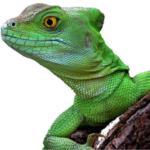 Экзотические животные, рептилии