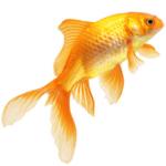 Рыбки, аквариумы